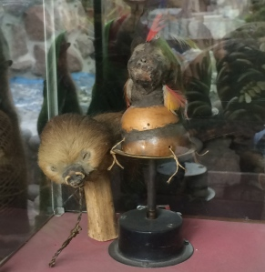 Shrunken head (right), shrunken guinea pig (left)